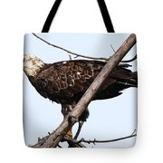 Young Adult Eagle Tote Bag