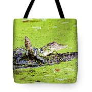 Young Alligator On A Log Tote Bag