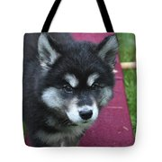 Young Alusky Puppy Standing On A Teeter Totter Tote Bag