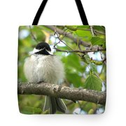 Young Black-capped Chickadee Tote Bag