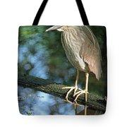 Young Black Crowned Night Heron Tote Bag