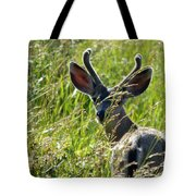 Young Black-tailed Deer With New Antlers Tote Bag
