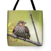 Young Blackbird Tote Bag