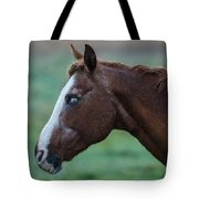 Young Blind Horse In The Rain Tote Bag