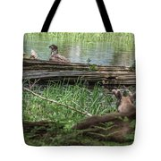 Young Buck Watching Eagle Tote Bag