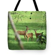 Young Buck With Two Does In The Meadow Tote Bag