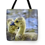 Young Canadain Goose Tote Bag