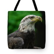 Young Eagle Tote Bag