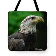 Young Eagle Tote Bag