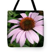 Young Echinacea Bloom Tote Bag
