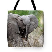 Young Elephant In The Light, Africa Wildlife Tote Bag