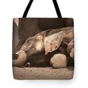 Young Elephant Lying Down Tote Bag