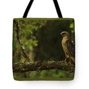 Young Hawk Tote Bag
