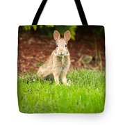 Young Healthy Wild Rabbit Eating Fresh Grass From Yard  Tote Bag