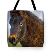 Young Icelandic Horse Tote Bag