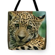 Young Jaguar Tote Bag by Sandy Keeton