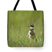 Young Killdeer In Grass Tote Bag