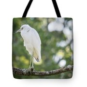 Young Little Blue Heron Tote Bag