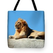 Young Male Lion Reclining On A Rock Tote Bag