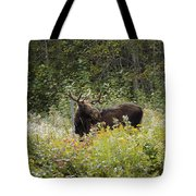 Young Male Moose Tote Bag