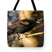 Young Male Red-winged Black Bird Tote Bag