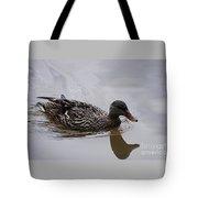 Young Mallard Hen 20130507_18 Tote Bag