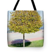 Young Maple Tree Tote Bag