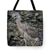 Young Night Heron Tote Bag