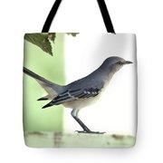 Young Northern Mockingbird Tote Bag