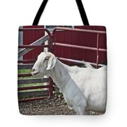 Young Old Goat White And Grayish Red Fence And Gate Barn In Close Proximity 2 9132017 Tote Bag