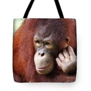 Young Orang Utan Looking Thoughtful Tote Bag