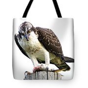 Young Osprey Tote Bag