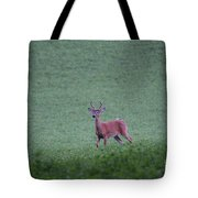 Young Pomfret Summer Buck Tote Bag