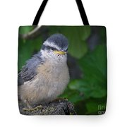 Young Red-breasted Nuthatch No. 1 Tote Bag