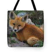 Young Red Fox Tote Bag