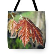 Young Red Maple Leaf In May Tote Bag