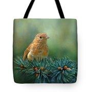 Young Robin On Pine Tree Tote Bag