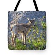 Young Rocky Mountain Bighorn Sheep Tote Bag
