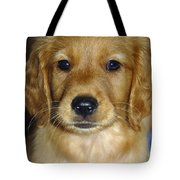 Young Sam Tote Bag by Stephen Anderson