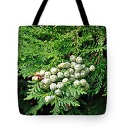 Young Seed Cones Of Lawson Cypress Tote Bag