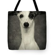 Young Whippet In Black And White Tote Bag