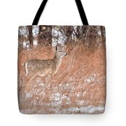 Young White-tailed Deer In The Snow Tote Bag