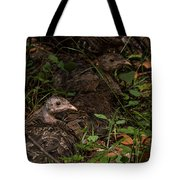 Young Wild Turkeys Tote Bag