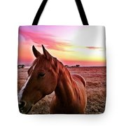 Zack During Sunset Tote Bag