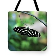 Zebra Butterfly Tote Bag