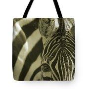 Zebra Close Up A Tote Bag