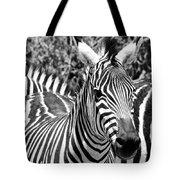 zebra Family Tote Bag