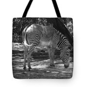 Zebra In Black And White Tote Bag