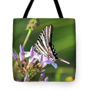 Zebra Swallowtail Butterfly On Phlox Tote Bag