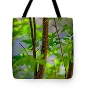Zen Forest Tote Bag